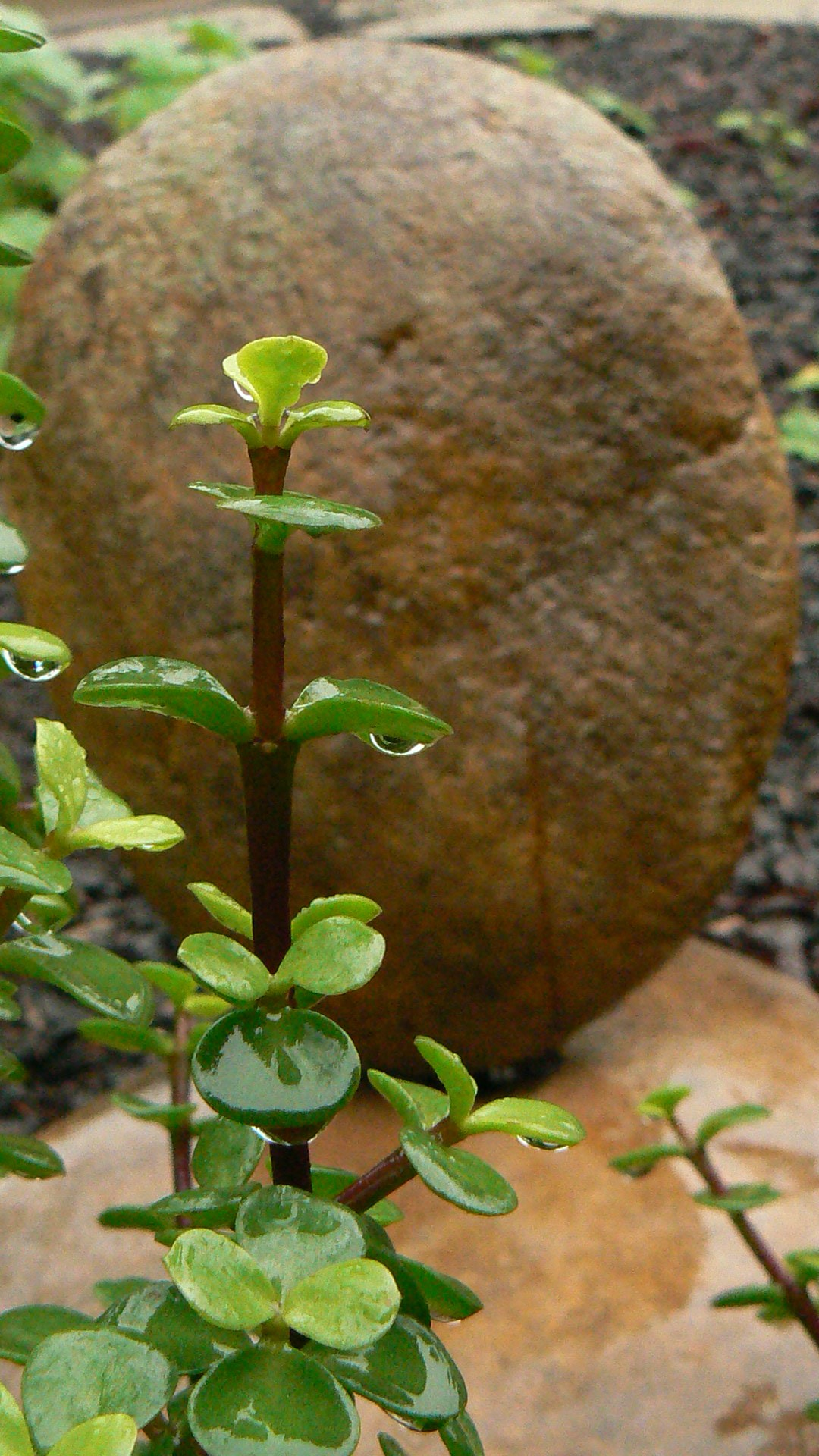 Is Garden Design a form of Art?   Roy Roberts Landscapes